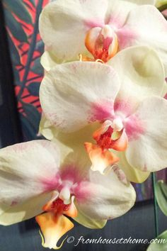 Orchids look exotic but are really pretty tough