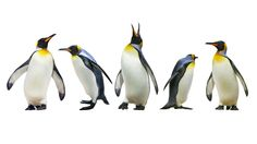 Penguins aren't necessary for your Windows desktop, but these guys can be fun to have around....