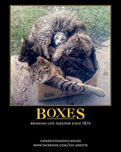 Gallery For > Cats In Boxes