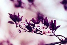 Photography Fine Art Print Purple Flower by VanBurensHomeDecor, $15.00