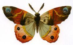 Victorian Dye Cut of Butterfly