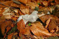 Respirația ciupercii http://ciupercomania.blogspot.com/2013/12/respiratia-ciupercii.html cunoasteți acest fenomen?