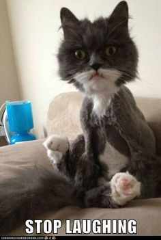 Lolcats: STOP LAUGHING - From Top 100 Awesome Funny pics, photos and memes. - SillyCool