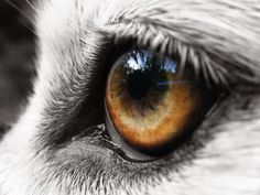 White Wolf : Stunning Closeup Pictures of Wolves Will Reach Into Your Soul