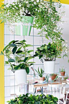 Homemade flowerpots - a guide and other DIY ideas - Decoration Solutions Diy Wall Planter, Diy Planters, Garden Planters, Hanging Planters, Contemporary Planters, Modern Planters, Room With Plants, Live Plants, House Plants