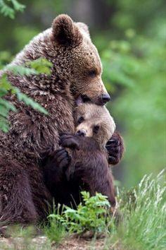 mama bear is hugging her cub