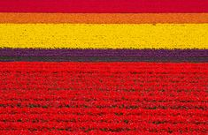 Tulip fields in the Netherlands /27 Surreal Places To Visit Before You Die (via BuzzFeed)