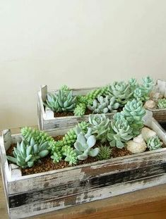 Succulents in rugged baskets.  Pretty!