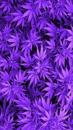 PURPLE LEAVES, IPHONE WALLPAPER BACKGROUND