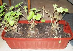 muskaty_prezimovani Flora, Plants, Outdoor, Gardening, Compost, Outdoors, Lawn And Garden, Plant, Outdoor Games