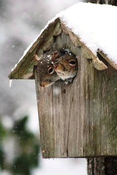 60 beautiful pictures of animals in the snow