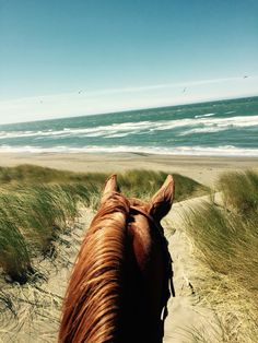 Hooves in the sand with my pony love