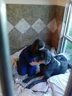 Veterinary Assistant, Raegan, had 4 Great Danes so keeping her from cuddling up with Otis while he recovered was an impossible task. Otis wasn't complaining either!