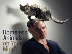 """No es la primera vez que vemos a Morrisey con un gato, aunque, en esta ocasión, se lo ha colocado en la cabeza. Junto a esta imagen aparece la frase """"Homeless animals on your mind?"""". Es la última campaña de PETA sobre los beneficios de controlar la natalidad de las mascotas"""