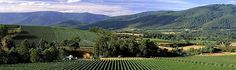 Yarra Valley wineries are the best settings for an enjoyable family vacation or a romantic escape. Come and taste their wines at their cellar door. Yarra Valley Wineries, Romantic Escapes, Best Settings, Wines, Vineyard, Restaurants, Victoria, Vacation, Top