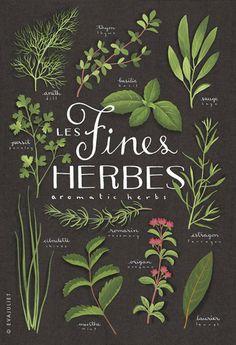 Fines herbes - Aromatics Culinary herbs bilingual... | Wicker Blog