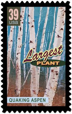 Wonders of America: Land of Superlatives USA 2005 Largest Plant: Quaking Aspen. The root system of the tree can produce a clone that appears to be an entire grove. Postage Stamp Design, Postage Stamps, Types Of Websites, Western Landscape, Going Postal, Aspen Colorado, Plant Information, Aspen Trees, Rare Plants