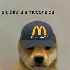 Doge Dog, Doge Meme, Cat And Dog Memes, Hello Memes, Funny Profile Pictures, Profile Pics, Dog Icon, Bad Friends, Cute Dogs Breeds