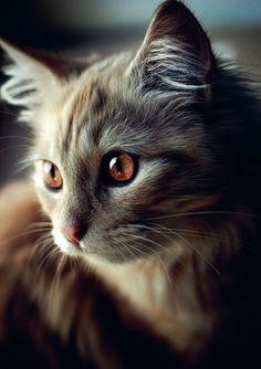 brown eyed kitten