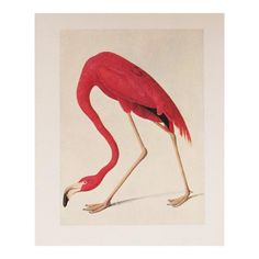 John James Audubon (American, b. Haiti, Robert Havell (American, Engraver after John James Audubon. American Flamingo, From The Birds of America (plate Hand-colored etching and aquatint on Whatman paper. Flamingo Painting, Flamingo Art, Pink Flamingos, Flamingo Wallpaper, Audubon Prints, Audubon Birds, Vintage Prints, Vintage Posters, Art Posters