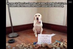 Pets with hoarding issues....