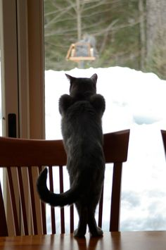Squirrel watching::
