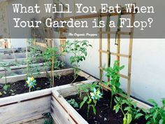 Most preppers plan on a survival garden...but what will you do if it dies?   The Organic Prepper