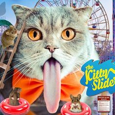 This ride looks questionable. Meowdel: @melissa_scottish  For a chance to be Hussified, follow @HussyCats on Instagram & use #HussyCats to submit your photos!