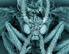 Eine Schmetterlingsmücke unter dem Elektronenmikroskop von Kevin Mackenzie, University of Aberdeen.