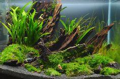 Aquascaping, Aquarium Aquascape, Betta Aquarium, Aquarium Landscape, Tropical Fish Aquarium, Tropical Fish Tanks, Nature Aquarium, Aquarium Design, Nano Cube