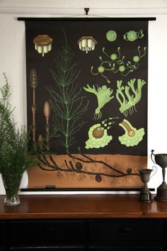 Horsetail Botanical Wall Chart design by Empirical Style