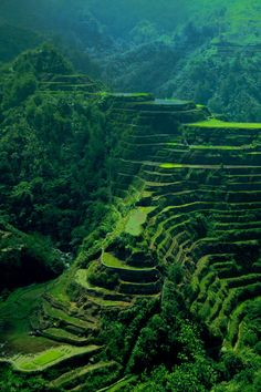 Banaue Rice Terraces in Batad, Banaue,  Ifugao ---- where the heart of the terrace is..