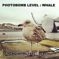 Super Photo bomb !