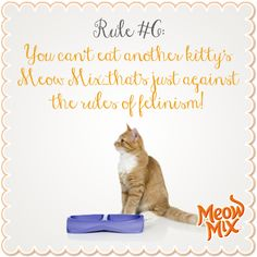Rule #6: You can't eat another kitty's Meow Mix…that's just against the rules of felinism!