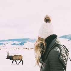 Jackson Hole National Elk Refuge