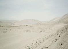 Landscape // Michael Schnabel