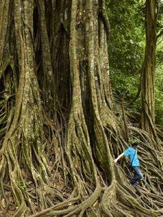 tree roots... Xishuangbanna China 2011