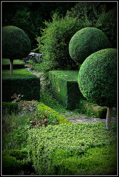 Sapperton Garden -Topiary
