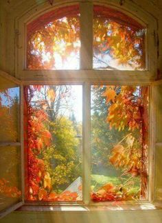 autumn scenery sunlight through the window Autumn Day, Autumn Home, Autumn Leaves, Autumn Morning, Golden Leaves, Morning Gif, Autumn Nature, Morning Light, Fall Winter