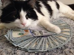awesome Upvote money cat and you will receive some economic luck in the next 48 hours