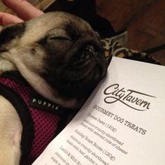Bar Hounds Hall of Fame - City Tavern Newcastle Newcastle, Dog Friends, Dog Treats, City, Dogs, Pet Dogs, Doggie Treats, Cities, Doggies