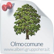 Olmo Comune - Elimina la bolletta, regala un albero - Gruppo Hera