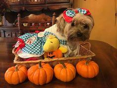 Autumn doggie,,,,