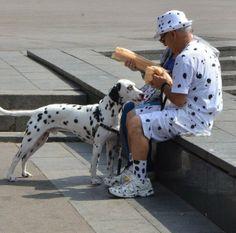 insolite chien dalmatien vetement