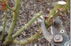 Permaculture, Plantation, Pruning Shears, Garden Tools, Flowers, Magazine, Top, Garden, Beautiful Gardens