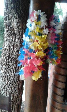 colares hawaii