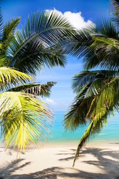 W RETREAT KOH SAMUI - Beach coconut trees