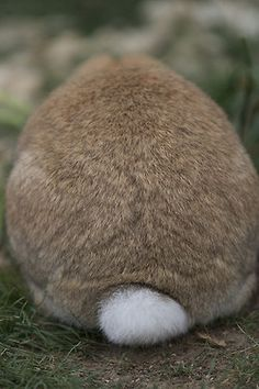 bunny tail on the bunny trail