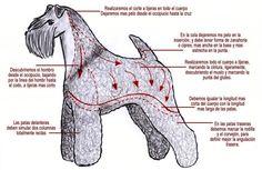 #Perros: La completa Guía para Profesionales de Peluquería Canina de Miguel Lluch y Ana Mª Barreiro