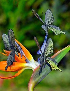 beautiful birds, butterflies and flowers– Сообщество– Google+